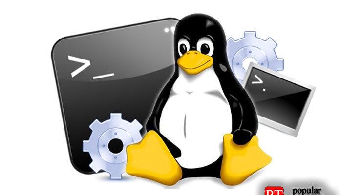 Как запустить команду «скрипт» («script») в Linux